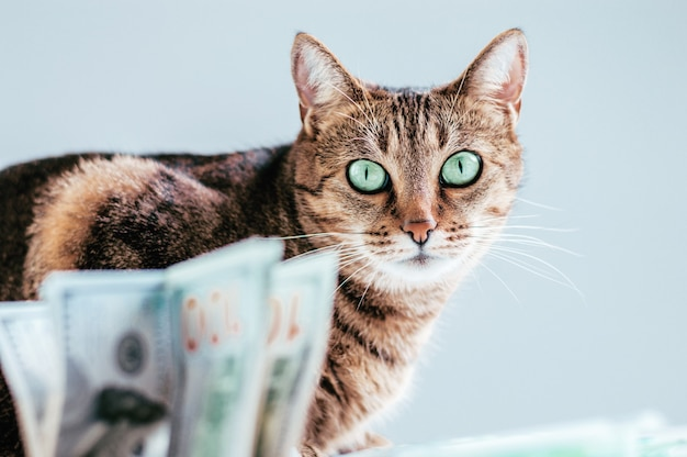 Chat sur fond de liasse d'argent. concept de don d'animaux. technique mixte