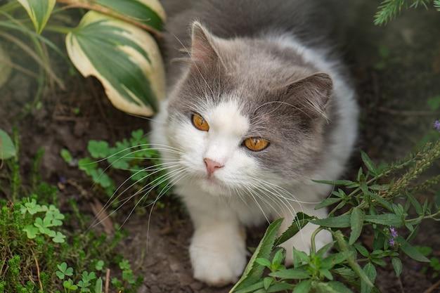 Chat gai se trouvant entre les fleurs au printemps. portrait de jeune chat heureux dans le jardin à l'extérieur. chat couché à travers un patch de fleurs.