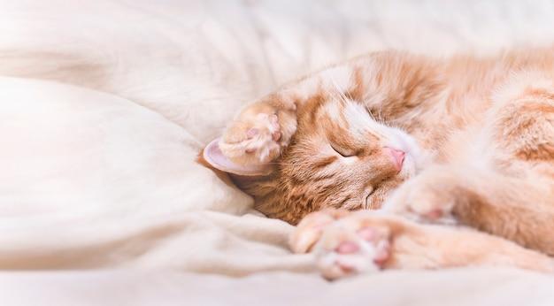 Chat gingembre mignon dormir dans son lit