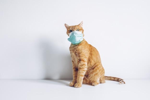 Chat gingembre portant un masque médical sur blanc