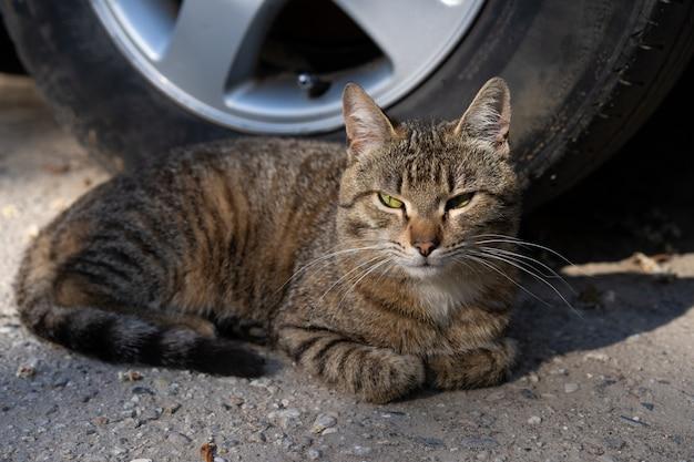 Le chat gît sur le sol