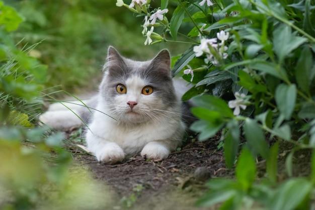 Chat avec une grande queue duveteuse sentant la fleur dans le jardin.