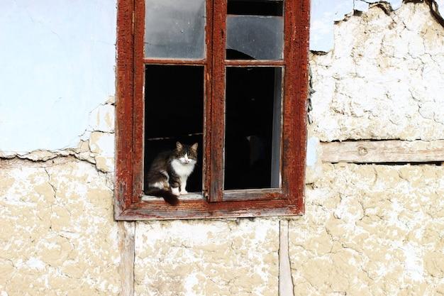 Chat gris abandonné dans la vieille maison