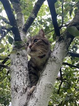 Chat gris assis sur un arbre. studio photo.