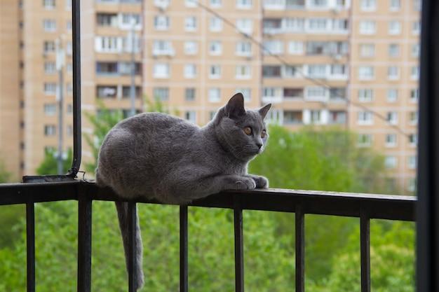 Chat gris assis sur le balcon contre un arbre.