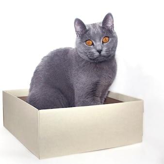Chat gris assis dans une boîte en carton. fond blanc. isoler.