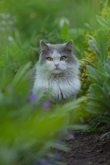 Chat gris et blanc d'étonnement se trouvant dans le jardin