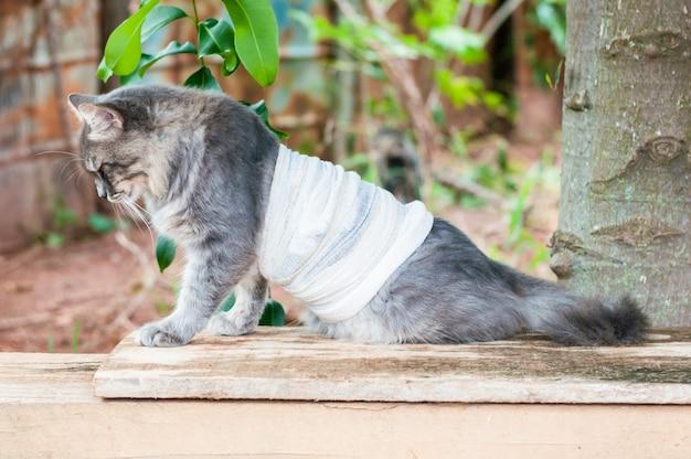 Chat gris drôle bandé
