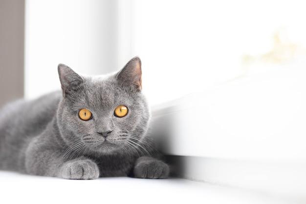 Un chat gris est allongé sur le rebord de la fenêtre.