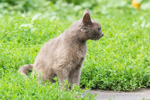 Chat gris sur l'herbe