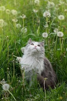 Chat gris jouant dans le jardin