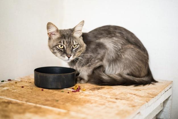 Chat gris mangeant des aliments