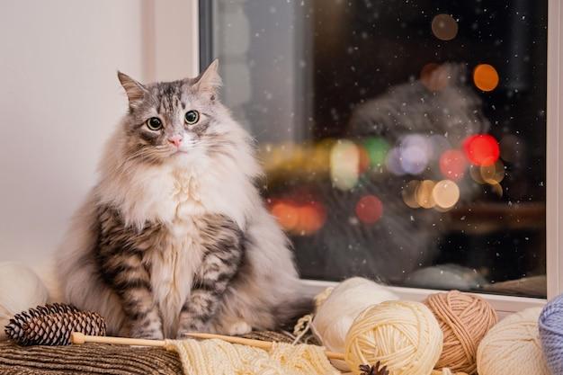 Chat gris moelleux est assis sur un rebord de fenêtre parmi des pelotes de laine