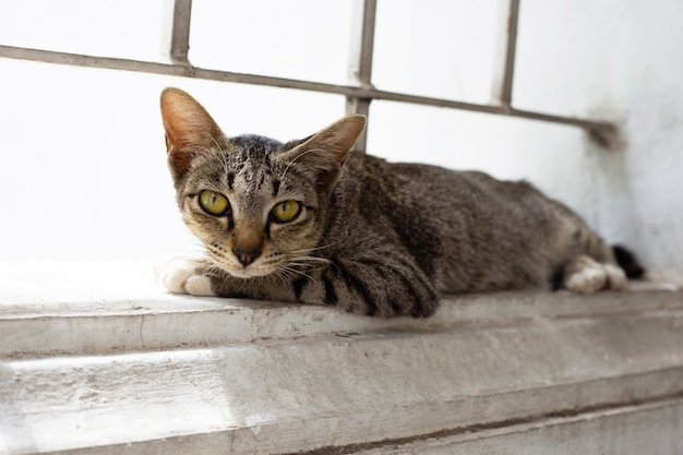 Un chat gris sur le mur de ciment.