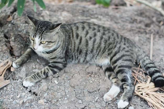 Chat gris rayé profiter et se détendre sur le sol du sol avec la lumière naturelle du soleil