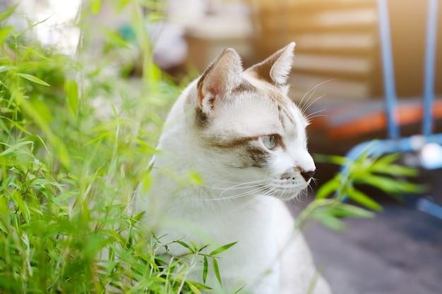 Chat gris se détendre et manger de l'herbe dans le jardin