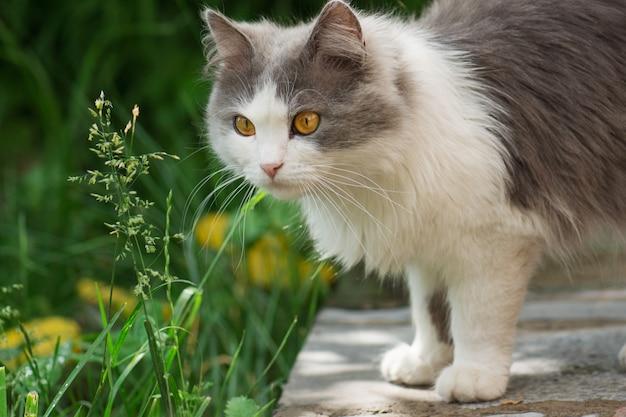 Chat gris sentant la fleur