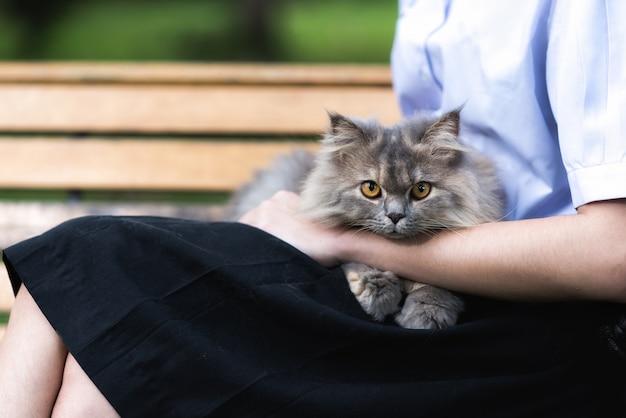 Chat gris sibérien assis sur les genoux du propriétaire