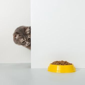 Le chat gris sort du coin, les émotions des animaux, se penche sur un bol de nourriture, sur un blanc, concept.