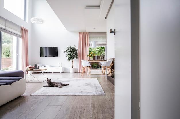 Chat gris sur tapis dans un salon spacieux intérieur avec télévision végétale et chaises à table