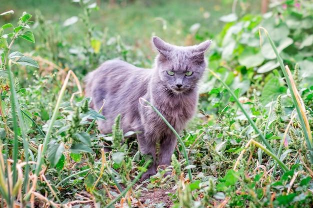 Un chat gris va le long du chemin dans le jardin