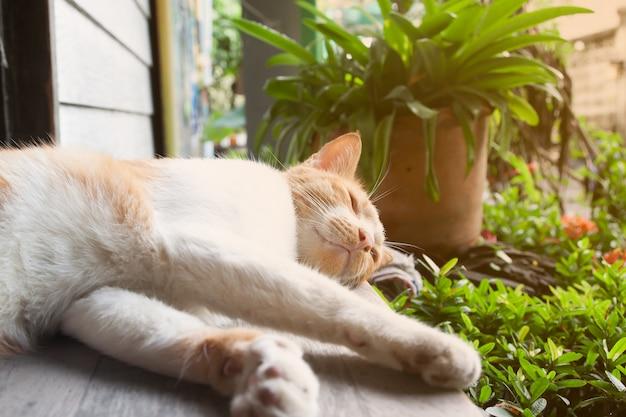 Chat heureux dormant dans le jardin