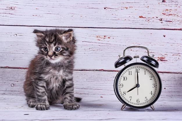 Chat avec horloge