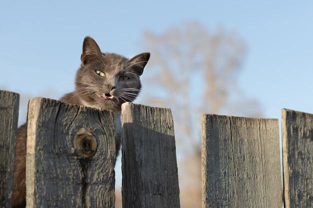 Le chat jette un œil derrière une clôture en bois et sourit.