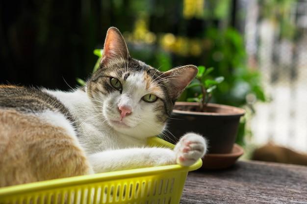 Chat jouant dans le panier il ressemble à ça.