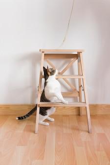 Chat jouant avec de la paille