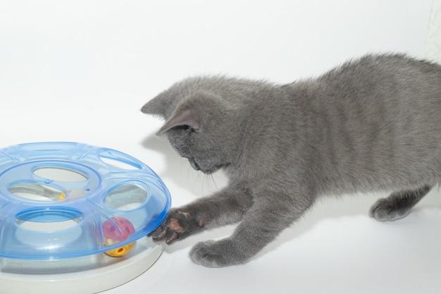 Le chat joue avec un jouet. occupation d'animaux domestiques.