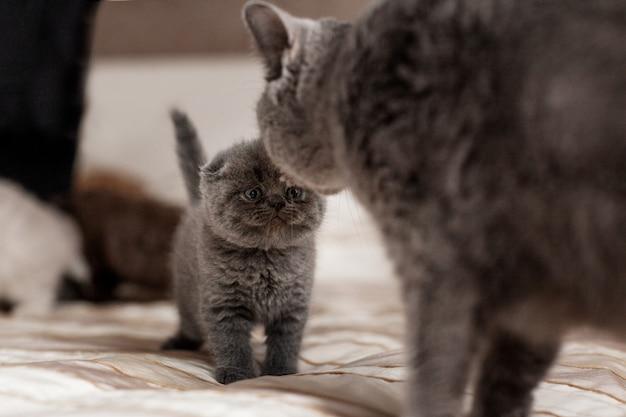 Le chat lèche son beau petit chaton