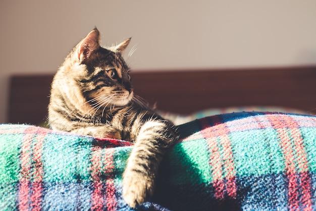 Chat sur le lit à la maison