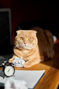 Chat ludique drôle allongé sur le bureau au soleil, lieu de travail à la maison avec une feuille de papier blanc, ordinateur portable, ordinateur portable, horloge, boules de papier froissé et fournitures.