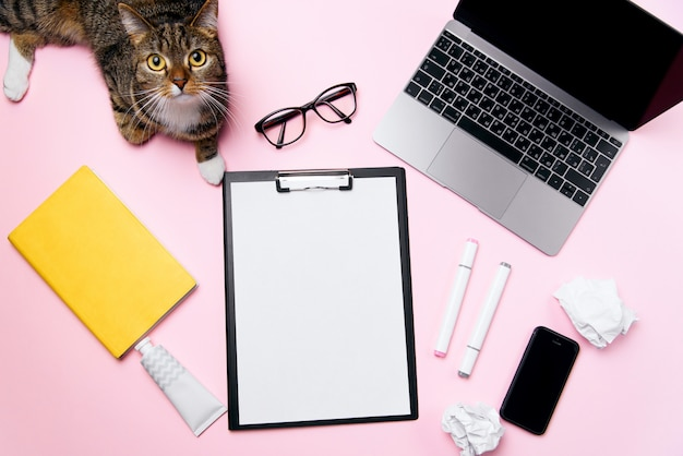 Chat ludique drôle allongé sur le fond de bureau de la femme