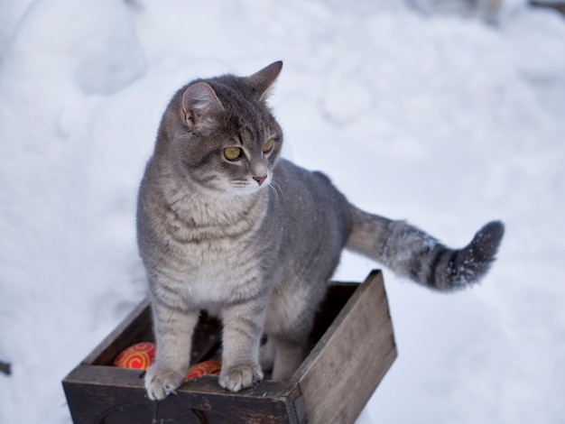 Chat magique avec boule de noël rouge sur la neige