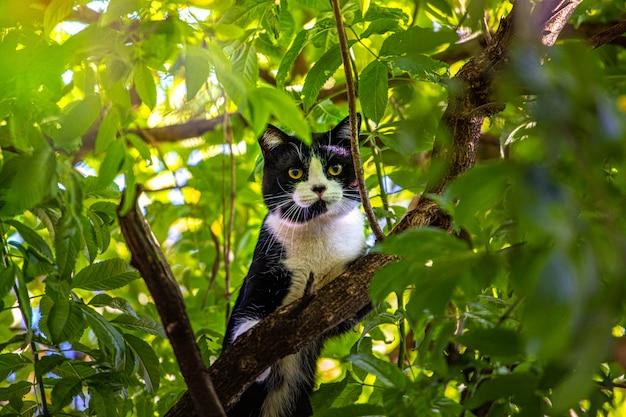 Chat magnifique noir et jaune dans la nature