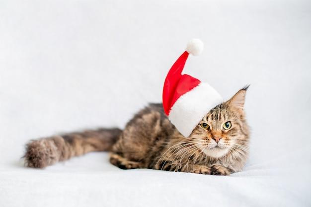 Chat maine coon couché isolé sur blanc avec chapeau de père noël