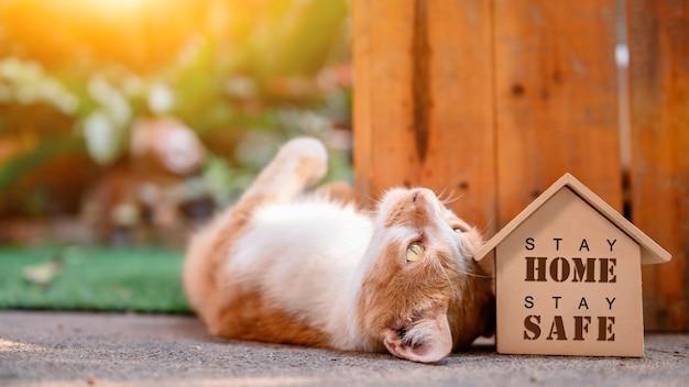 Chat avec maison en bois. auto-quarantaine et restez à la maison pendant covid-19. bel animal de compagnie dans le jardin avec jouet. restez à la maison, restez en sécurité et concept de distanciation sociale.