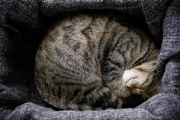 Le chat de la maison se trouve et dort sur une couverture tricotée, confortablement recroquevillé.