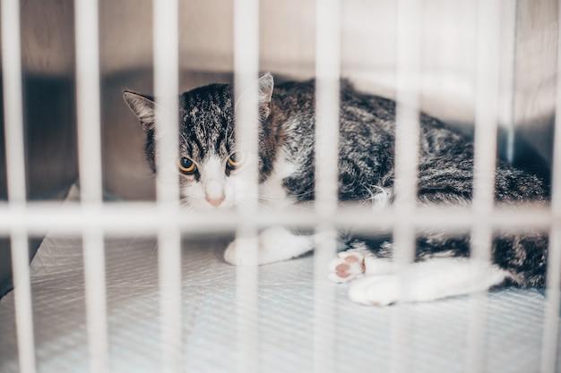 Chat malade dans la cage dans une clinique vétérinaire, concept vétérinaire