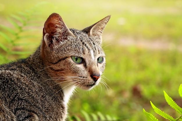 Chat mâle dans le jardin