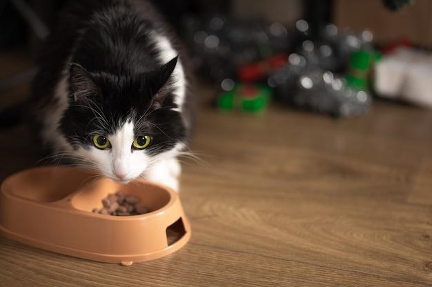 Le chat mange de la nourriture dans un bol sur le fond d'un arbre de noël flou avec des cadeaux de noël. copie espace