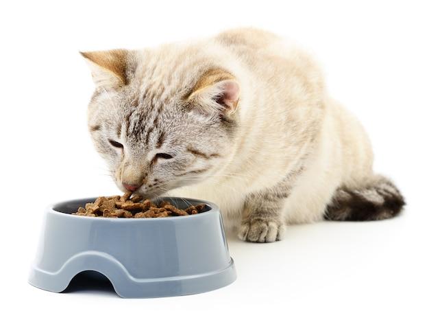 Chat mangeant de la nourriture sèche sur blanc.