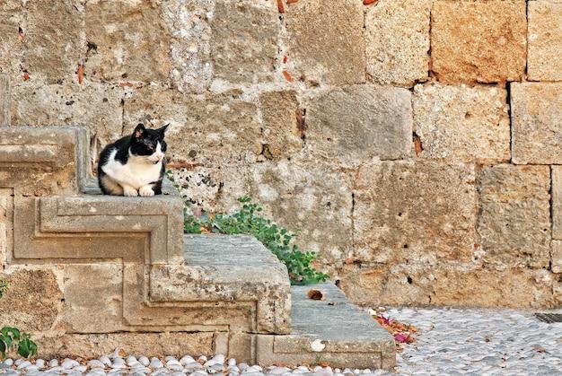 Chat sur les marches de la maison