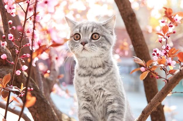 Chat mignon sur l'arbre en fleurs à l'extérieur