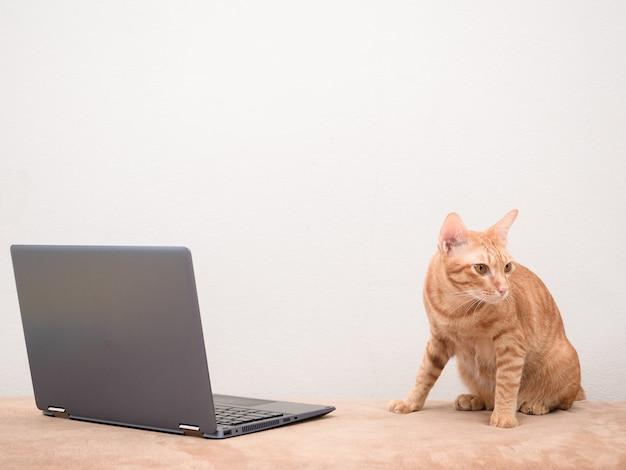 Chat mignon assis sur un canapé avec un ordinateur portable avec un fond de mur blanc