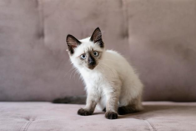 Chat mignon assis sur le canapé