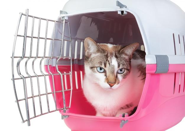 Chat mignon assis à la maison à regarder depuis la cellule. sur un mur blanc.