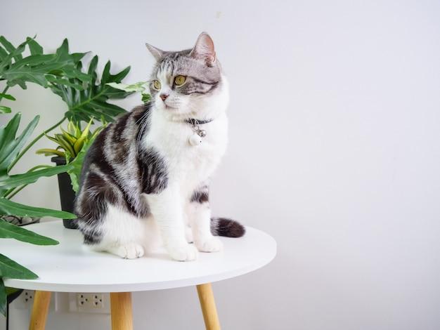 Chat mignon assis sur table et arbre purificateur d'air monstera, sansevieria dans le salon